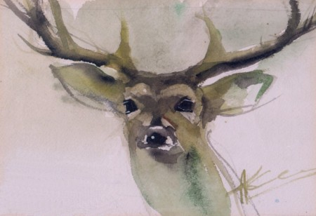 deer watercolor B 1000x685